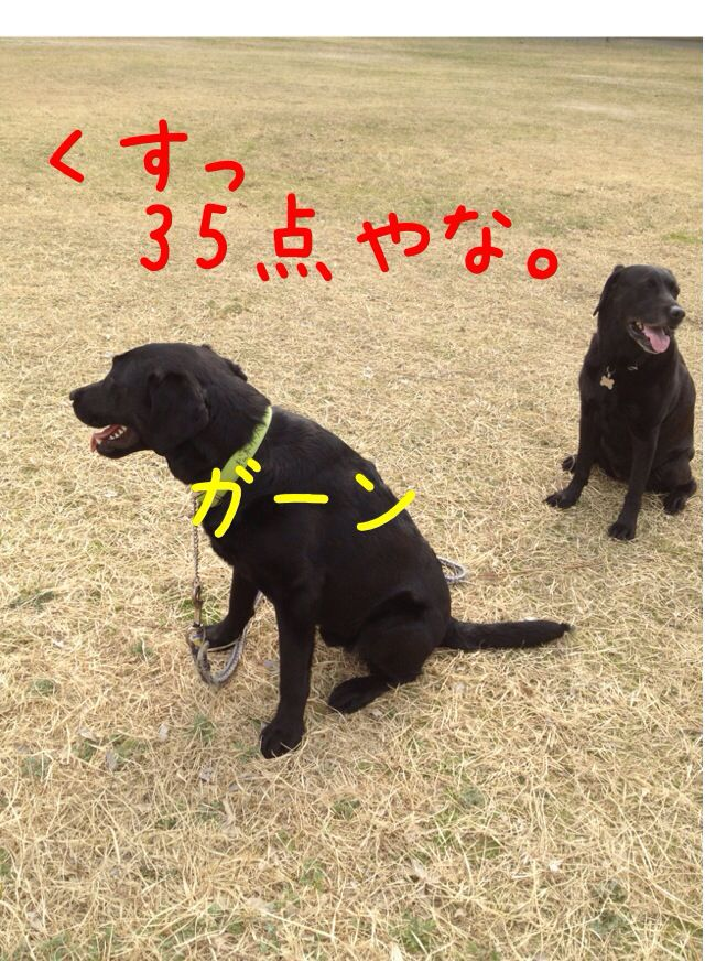 小太郎劇場_e0244283_31571.jpg