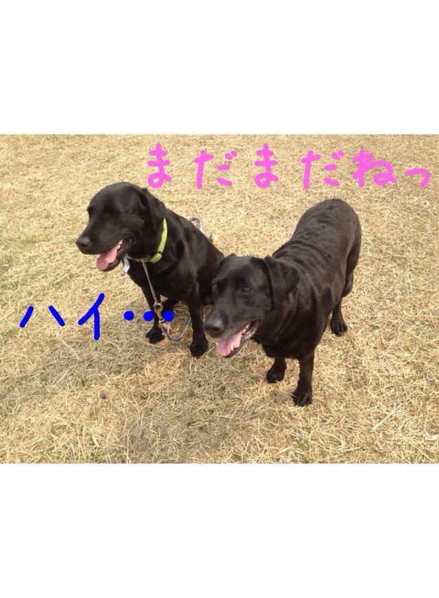 小太郎劇場_e0244283_315996.jpg