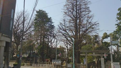 『春ですね』_a0075684_23213760.jpg
