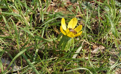 春のような♪_f0106597_334289.jpg