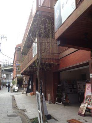 二子玉川  美味しいイタリアン_c0267598_1412867.jpg