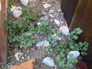 お庭の整備_f0255704_0423692.jpg