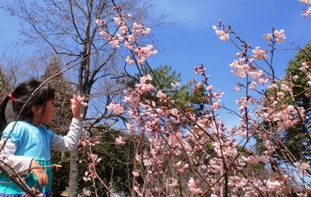 春を探しに ~白いタンポポ~_f0163105_1494071.jpg