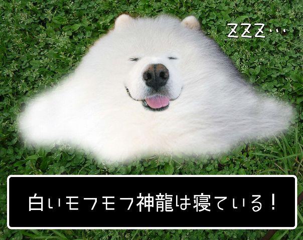 c0062832_640282.jpg