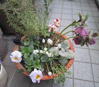 もう春ですね~♪_b0177436_12363815.jpg