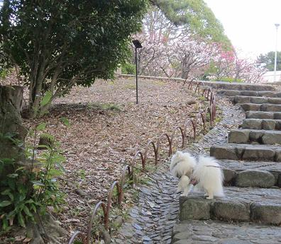もう春ですね~♪_b0177436_12385327.jpg