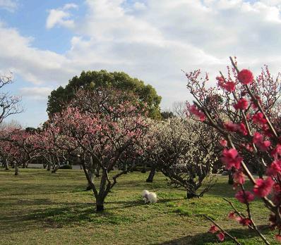 もう春ですね~♪_b0177436_1238960.jpg