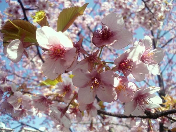 春がきた、、、。_e0077638_14134564.jpg