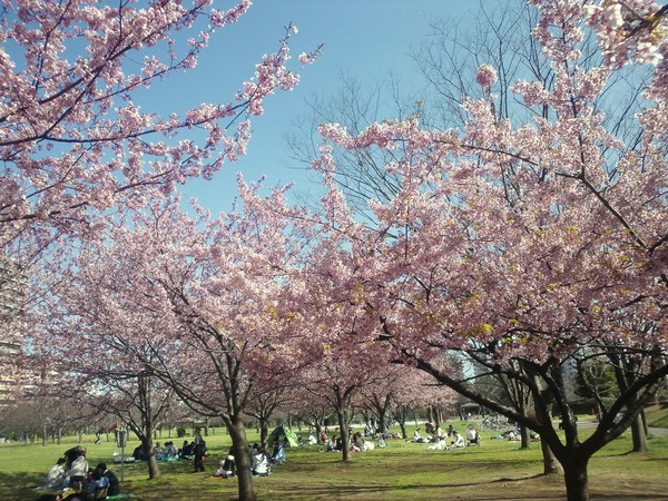 春がきた、、、。_e0077638_14143787.jpg