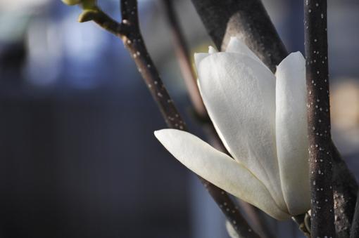 春の花いろいろ_f0143469_16361633.jpg