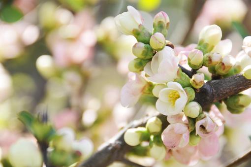 春の花いろいろ_f0143469_16364930.jpg