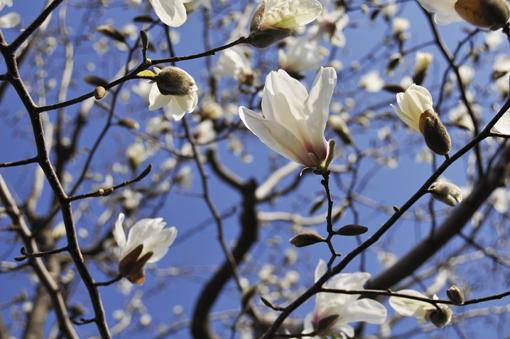 春の花いろいろ_f0143469_16372144.jpg