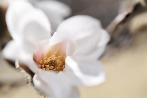 春の花いろいろ_f0143469_16373392.jpg