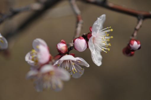 春の花いろいろ_f0143469_16375716.jpg