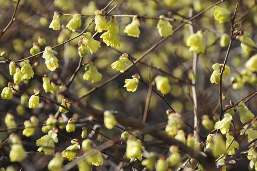 春の花いろいろ_f0143469_16381032.jpg
