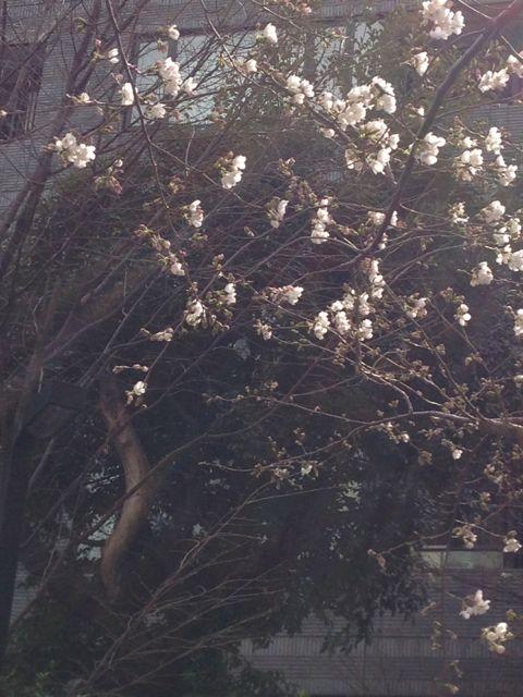 2013.3.18   風が強いです_a0083571_14391357.jpg