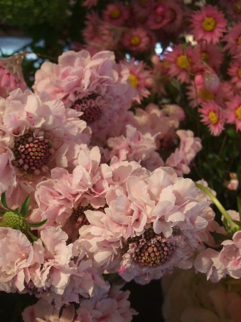 オークリーフ(桜の開花)_f0049672_16414383.jpg