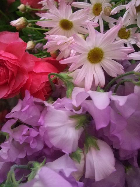 オークリーフ(桜の開花)_f0049672_16415721.jpg