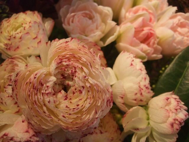 オークリーフ(桜の開花)_f0049672_16422076.jpg