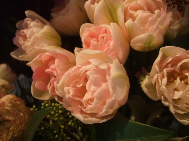 オークリーフ(桜の開花)_f0049672_1642374.jpg
