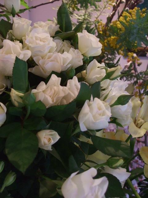 オークリーフ(桜の開花)_f0049672_1642523.jpg