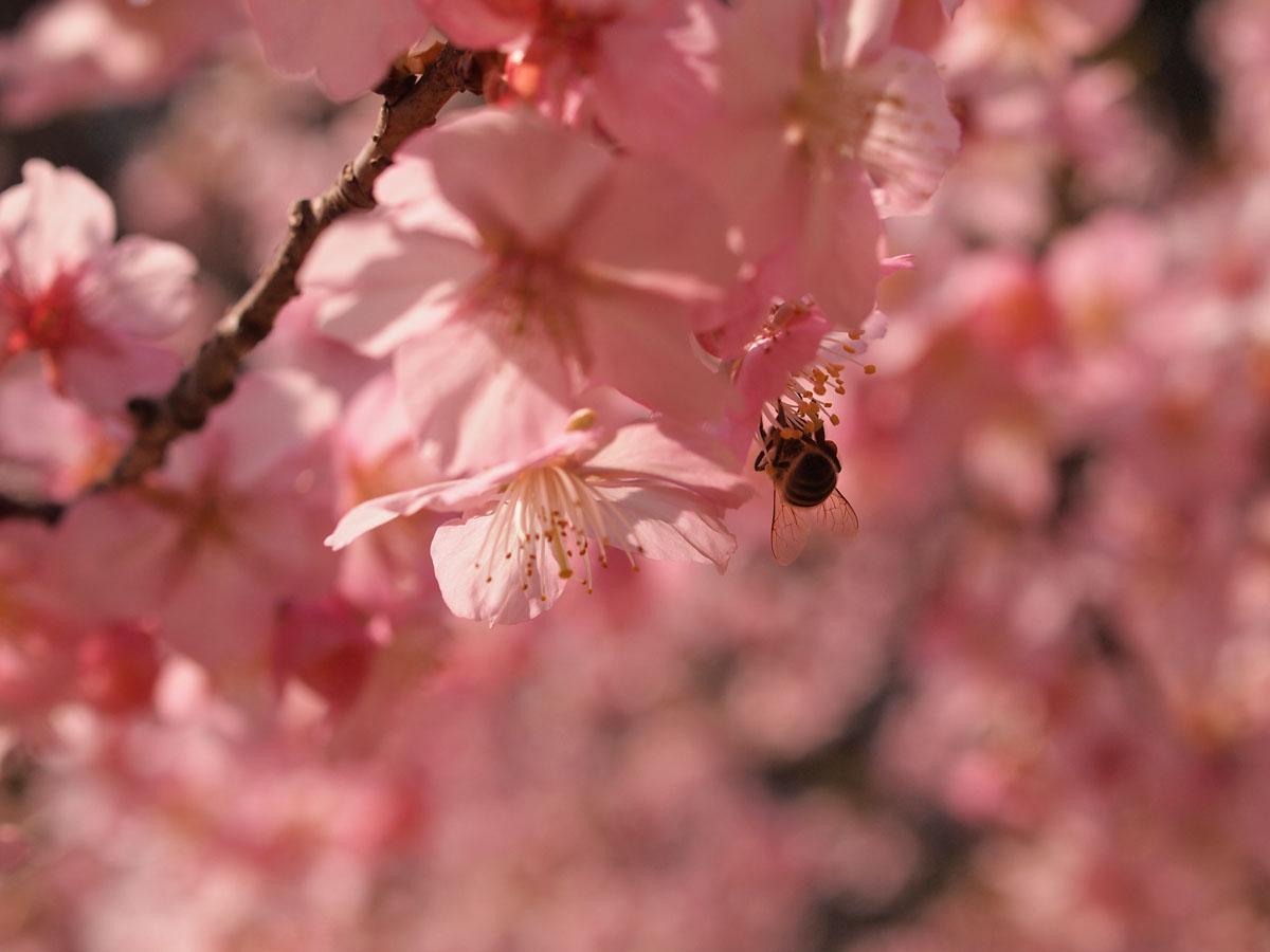 お花が続きます が・・・_b0021375_22371775.jpg