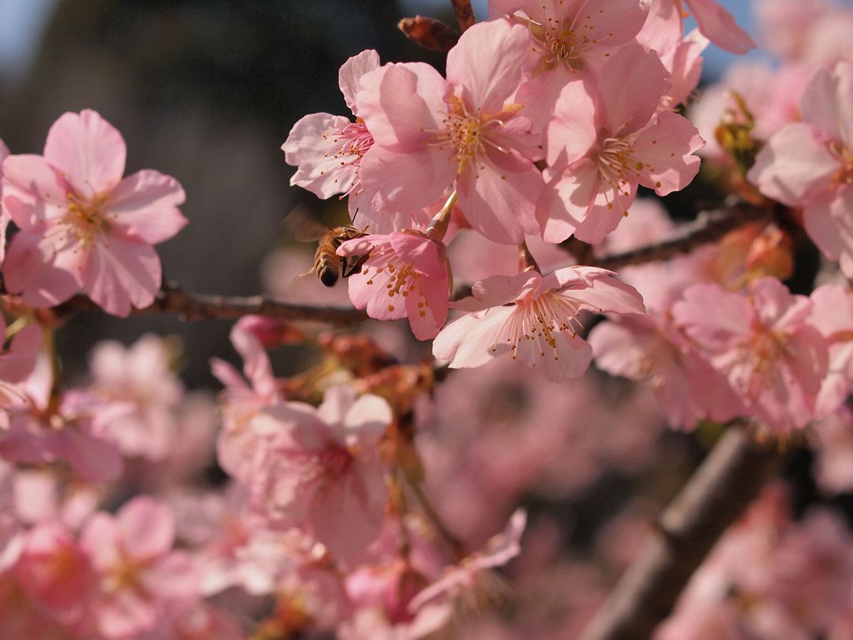 お花が続きます が・・・_b0021375_22372692.jpg