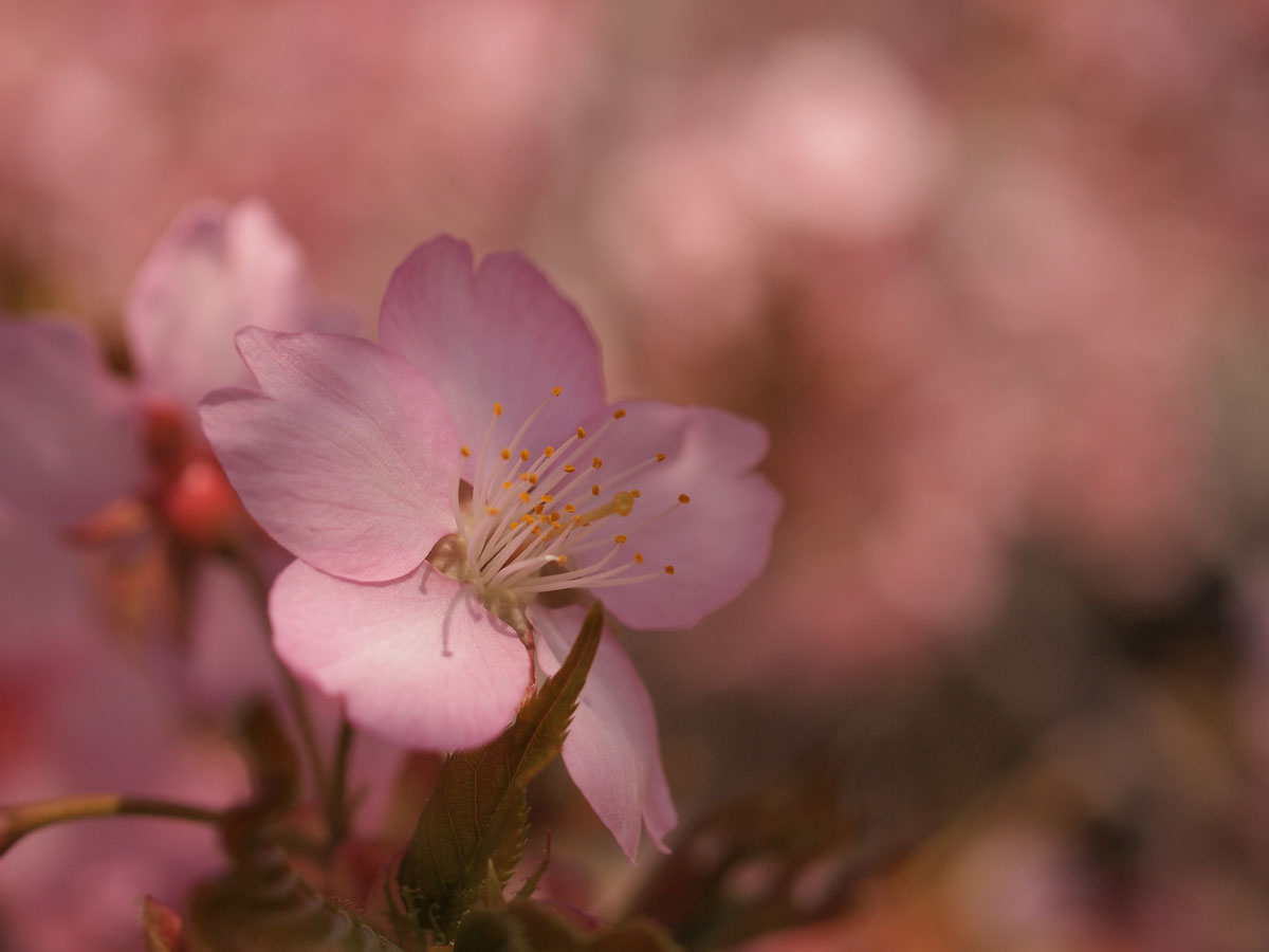 お花が続きます が・・・_b0021375_22373478.jpg