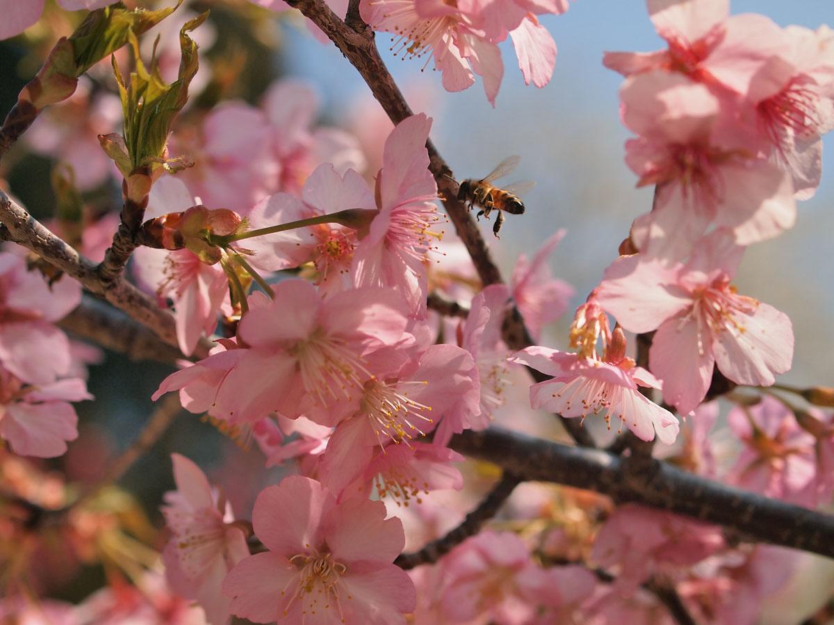 お花が続きます が・・・_b0021375_22374292.jpg