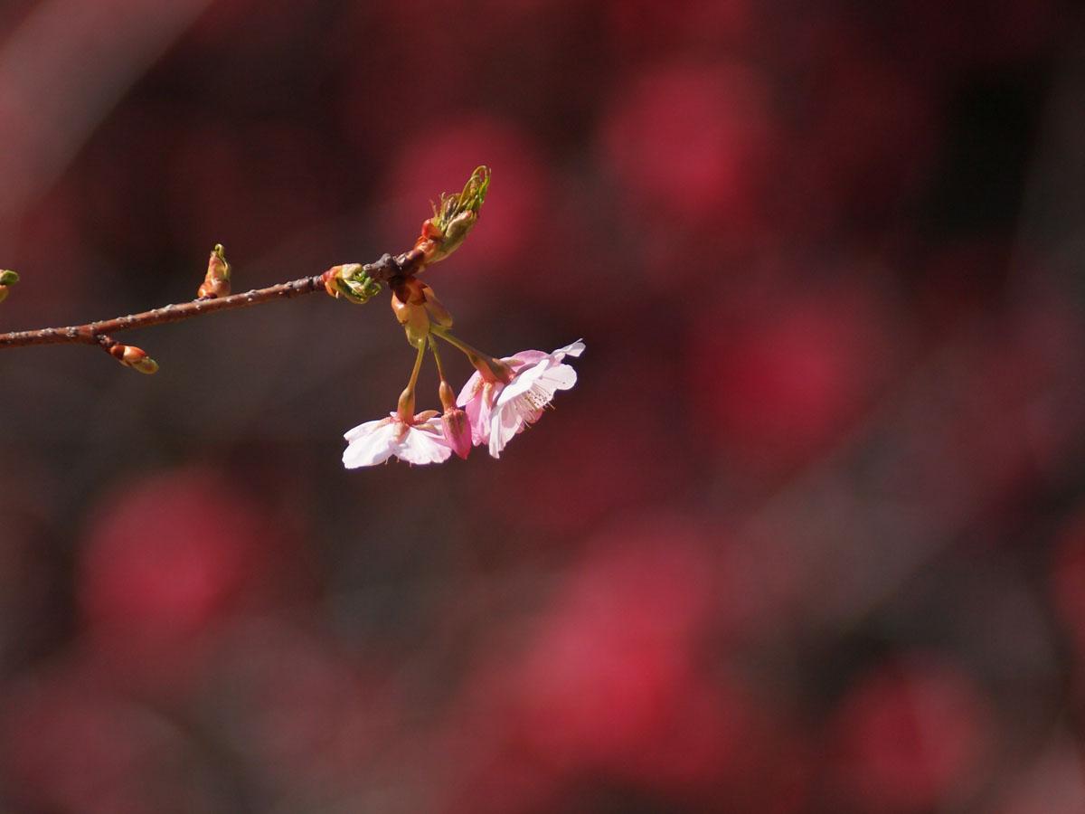 お花が続きます が・・・_b0021375_22441533.jpg