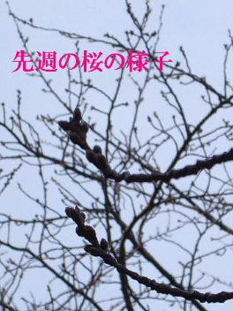 f0039281_1343202.jpg