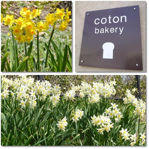 coton bakery_d0078486_8145627.jpg