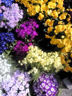 春の実りいただきます。_e0220493_922510.jpg