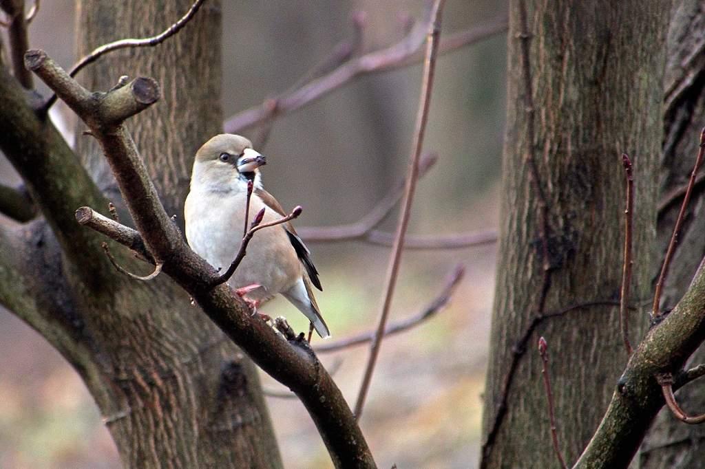 公園のシメ/今日のカワセミ/ミラーレスカメラにテレコンレンズを_b0024798_20415392.jpg