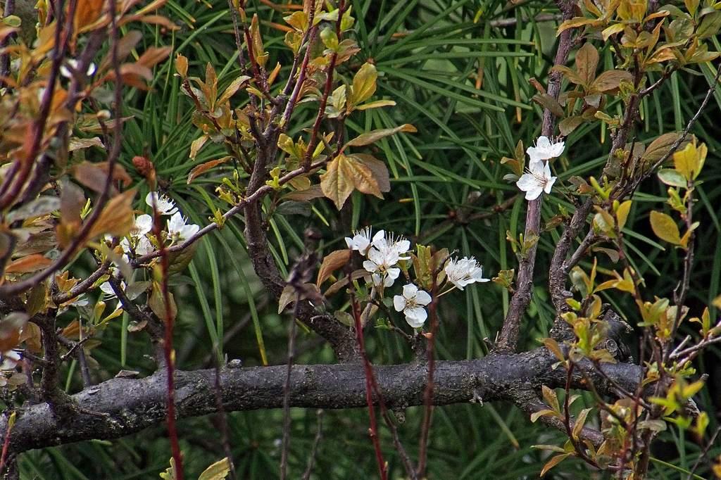 公園のシメ/今日のカワセミ/ミラーレスカメラにテレコンレンズを_b0024798_21134792.jpg