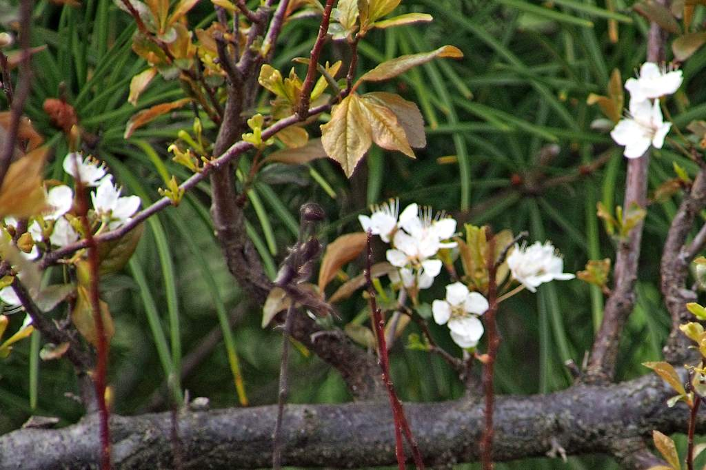 公園のシメ/今日のカワセミ/ミラーレスカメラにテレコンレンズを_b0024798_21135638.jpg