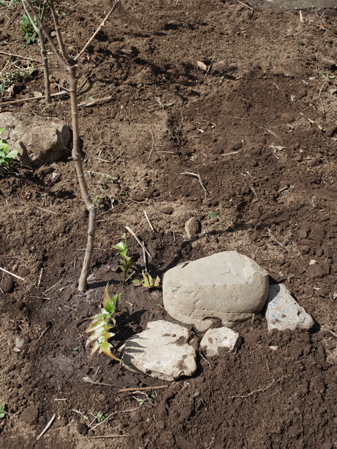 春の庭作り_e0276411_2223288.jpg