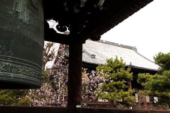 知恩寺のフジさくら_e0048413_21125121.jpg