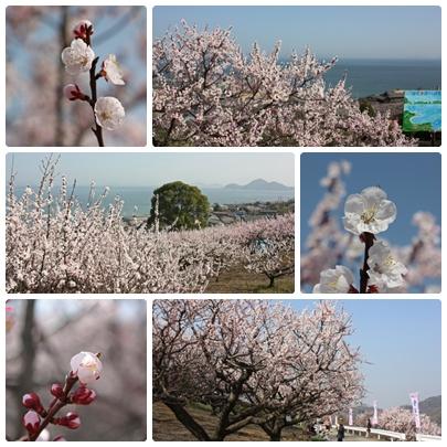 花便りが気にかかる季節になりましたね。_f0167415_17412685.jpg