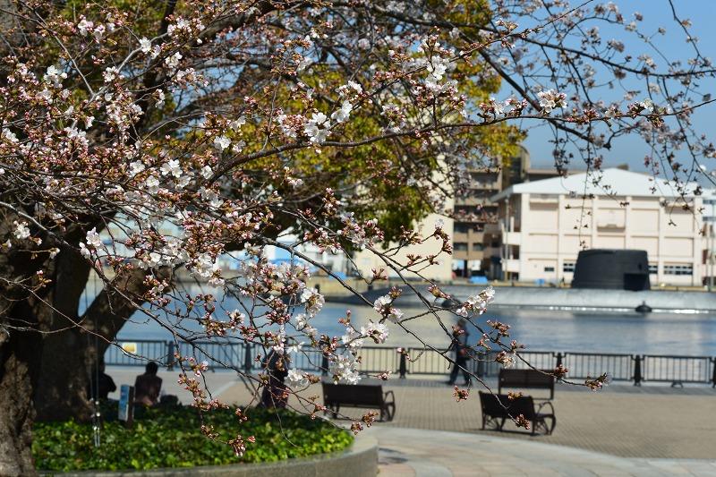桜 2013 ヴェルニー公園_d0065116_21494590.jpg