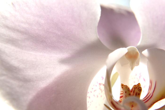 薄ピンクの花_c0120834_10445869.jpg
