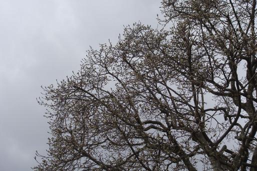 春の嵐_e0226943_004248.jpg