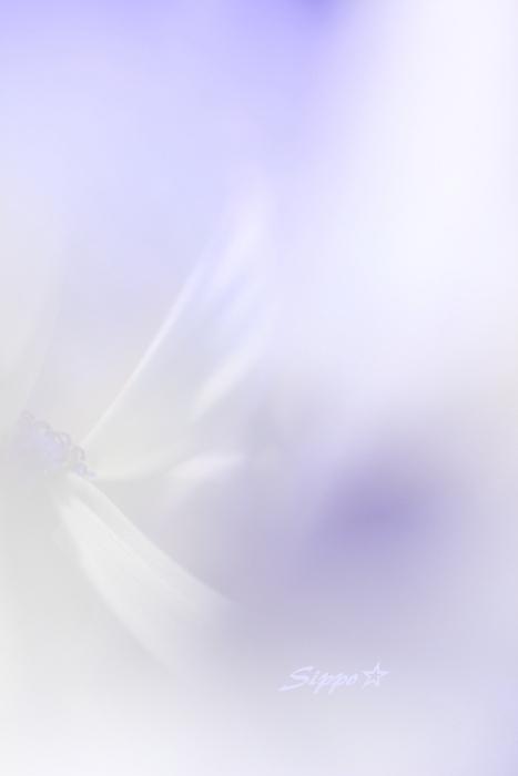 ■■ 花が魅せてくれるもの ~2 stage~ ■■_c0195662_22313148.jpg