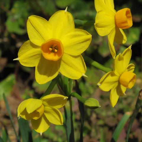 春の花を駆け足で♪_f0158364_12185473.jpg