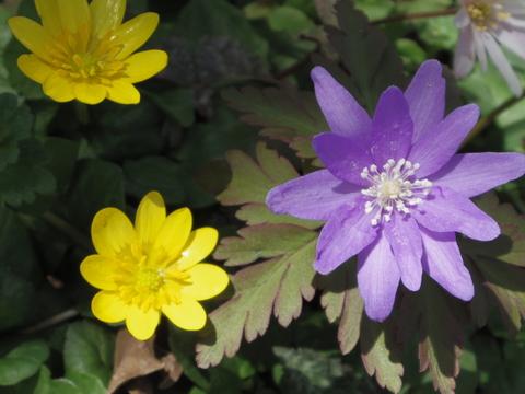 春の花を駆け足で♪_f0158364_121923100.jpg