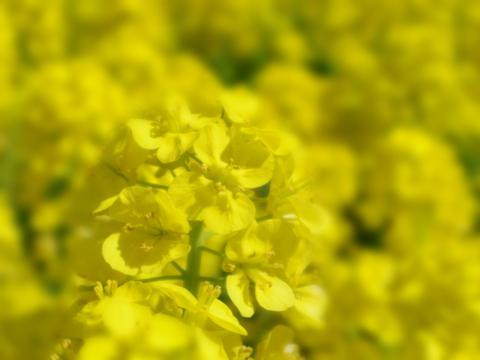 春の花を駆け足で♪_f0158364_12194183.jpg