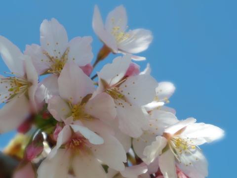 春の花を駆け足で♪_f0158364_1220116.jpg