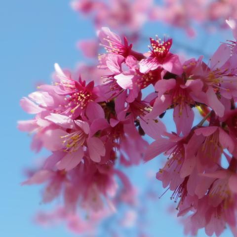 春の花を駆け足で♪_f0158364_12203321.jpg