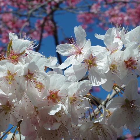春の花を駆け足で♪_f0158364_12222382.jpg