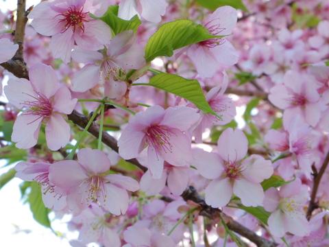 春の花を駆け足で♪_f0158364_12224585.jpg